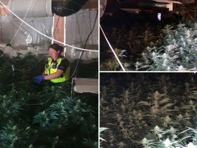 £1m cannabis factory raided after 'men seen brandishing weapons'