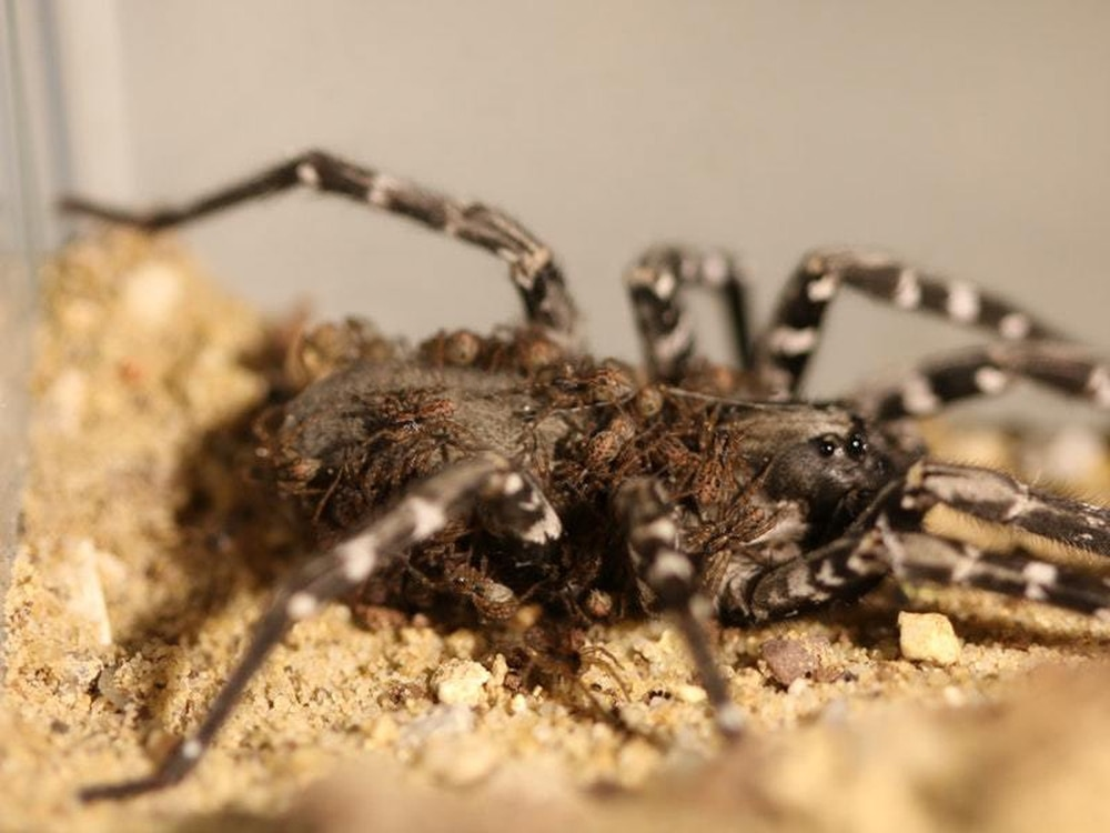 Zoological Society of London reveals breeding success for ...