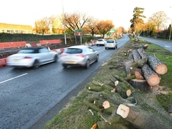 6,359 trees axed by councils across the Black Country