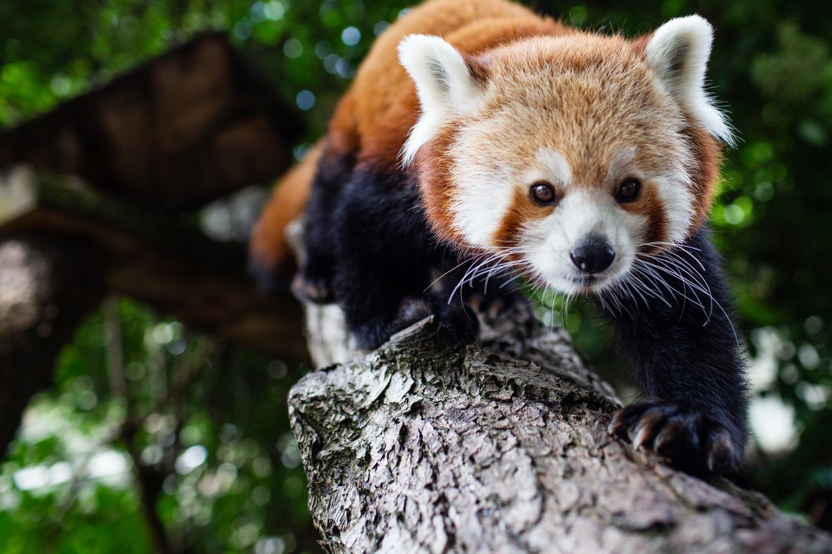 Love Your Zoo week at Drayton Manor