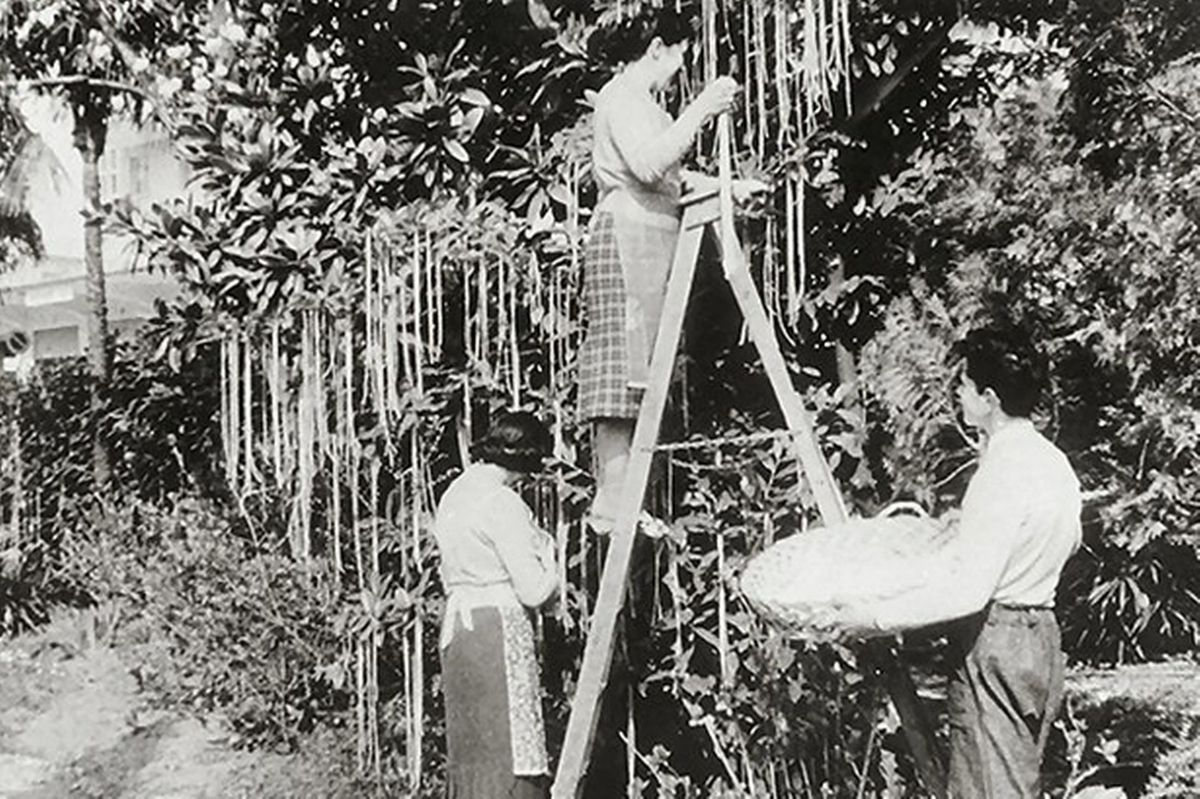 The infamous Panorama spaghetti trees, broadcast in 1957