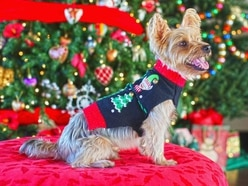 Over 300 pooches braved the snow to set the record for the most dogs in Christmas jumpers