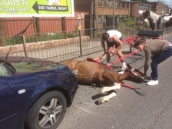 Horse left for dead by owners after being hit by car