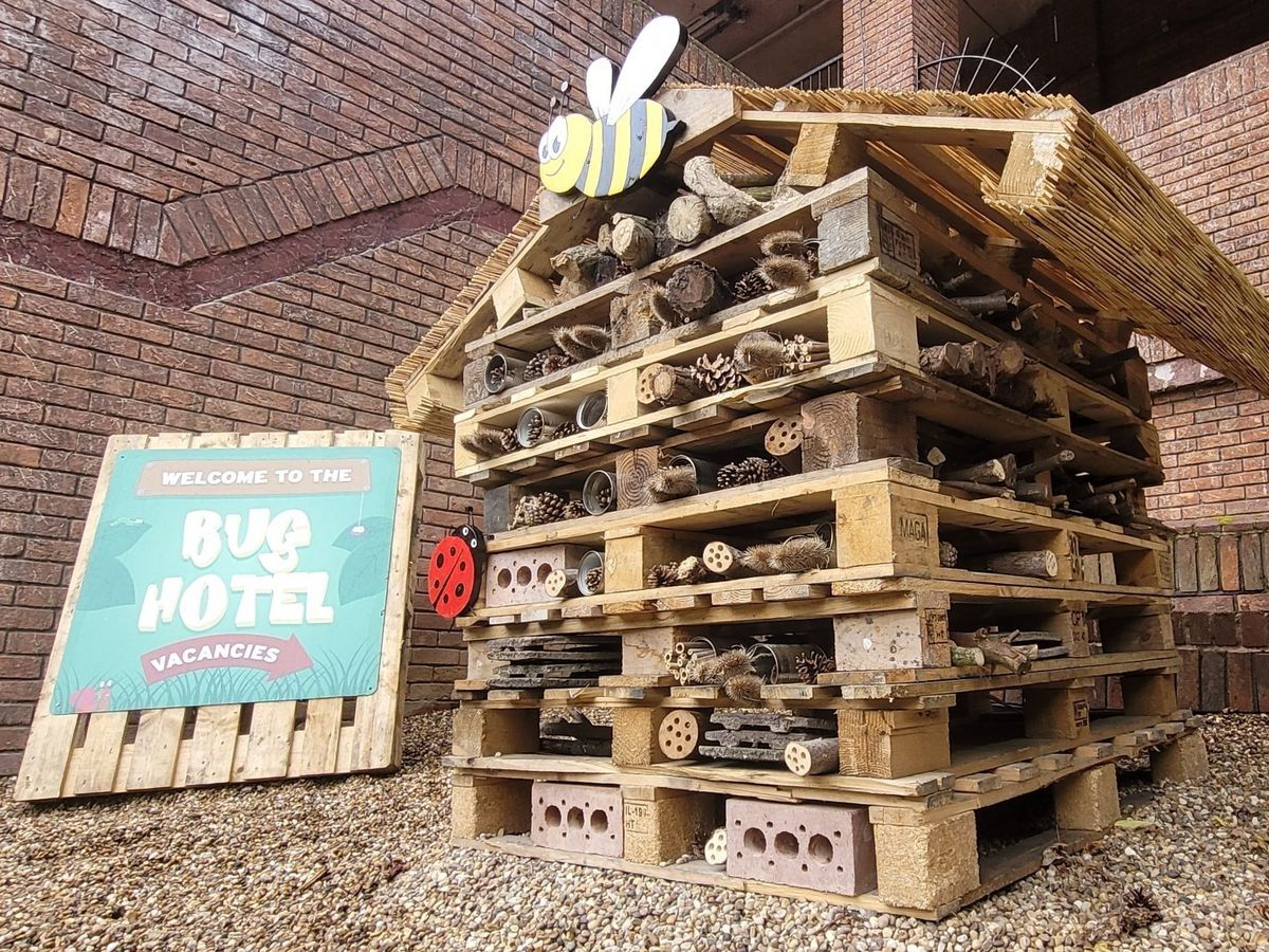 There will be plenty of fun with a new Bug Hotel