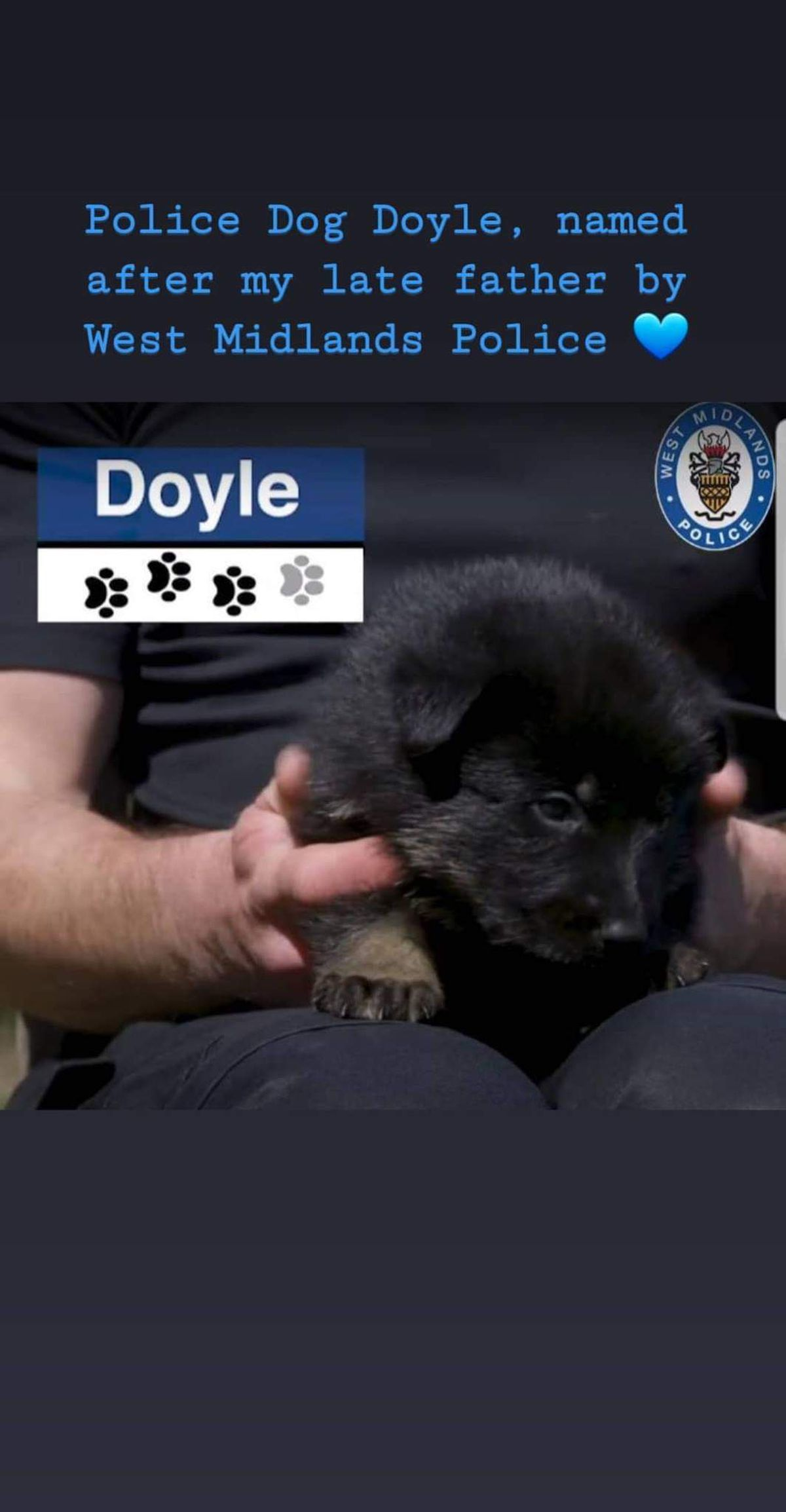 Police Dog Doyle