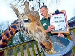 Dudley Zoo's annual stocktake begins - with VIDEO