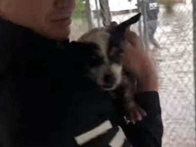 Watch: Peta is saving the pets that were left behind after Hurricane Florence