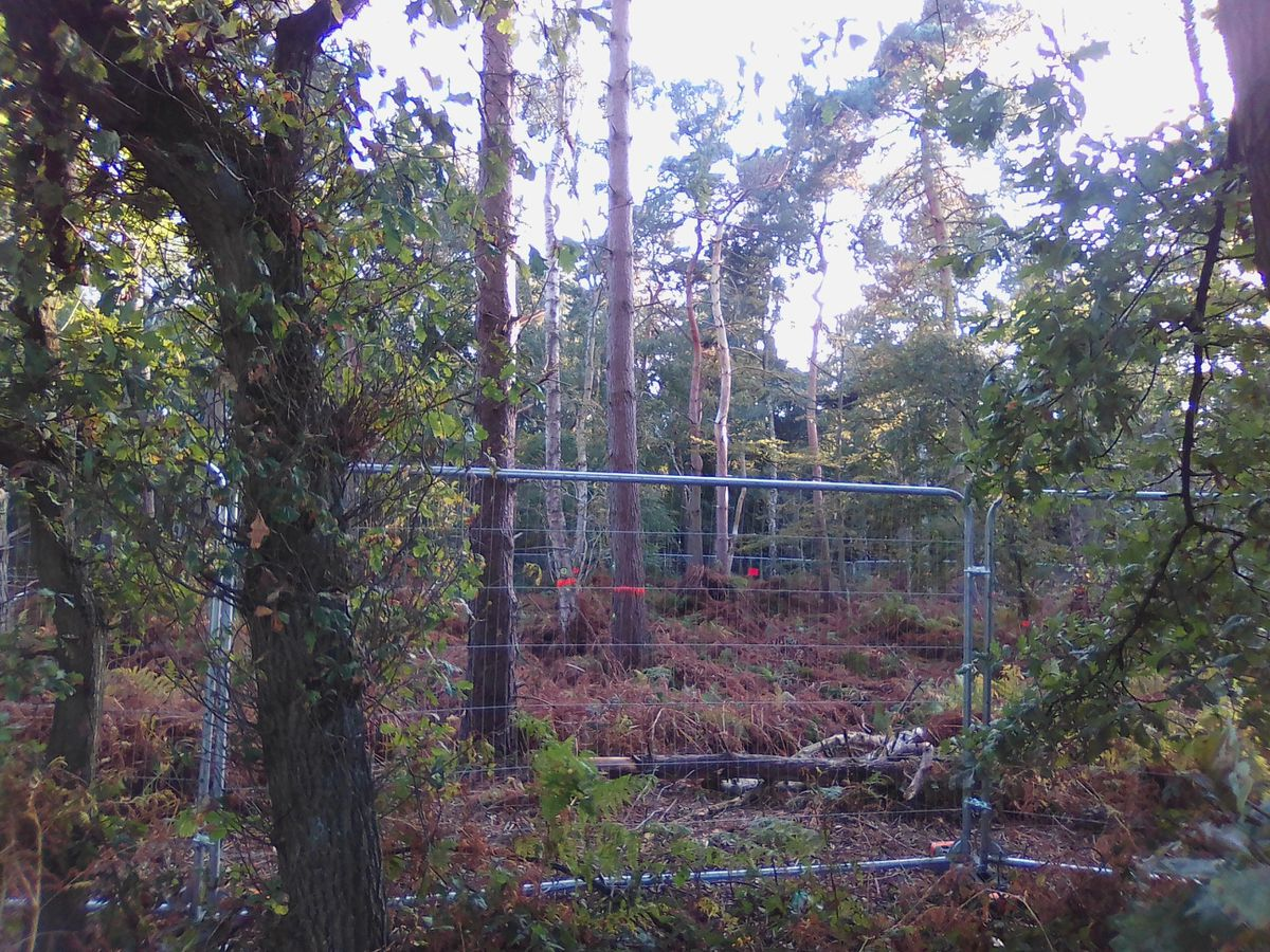 Hundreds of trees have been felled at ancient woodlands near Lichfield (credit: @StaffsWildlife)