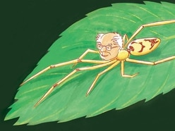 Scientists have named a smiley new spider species after Bernie Sanders