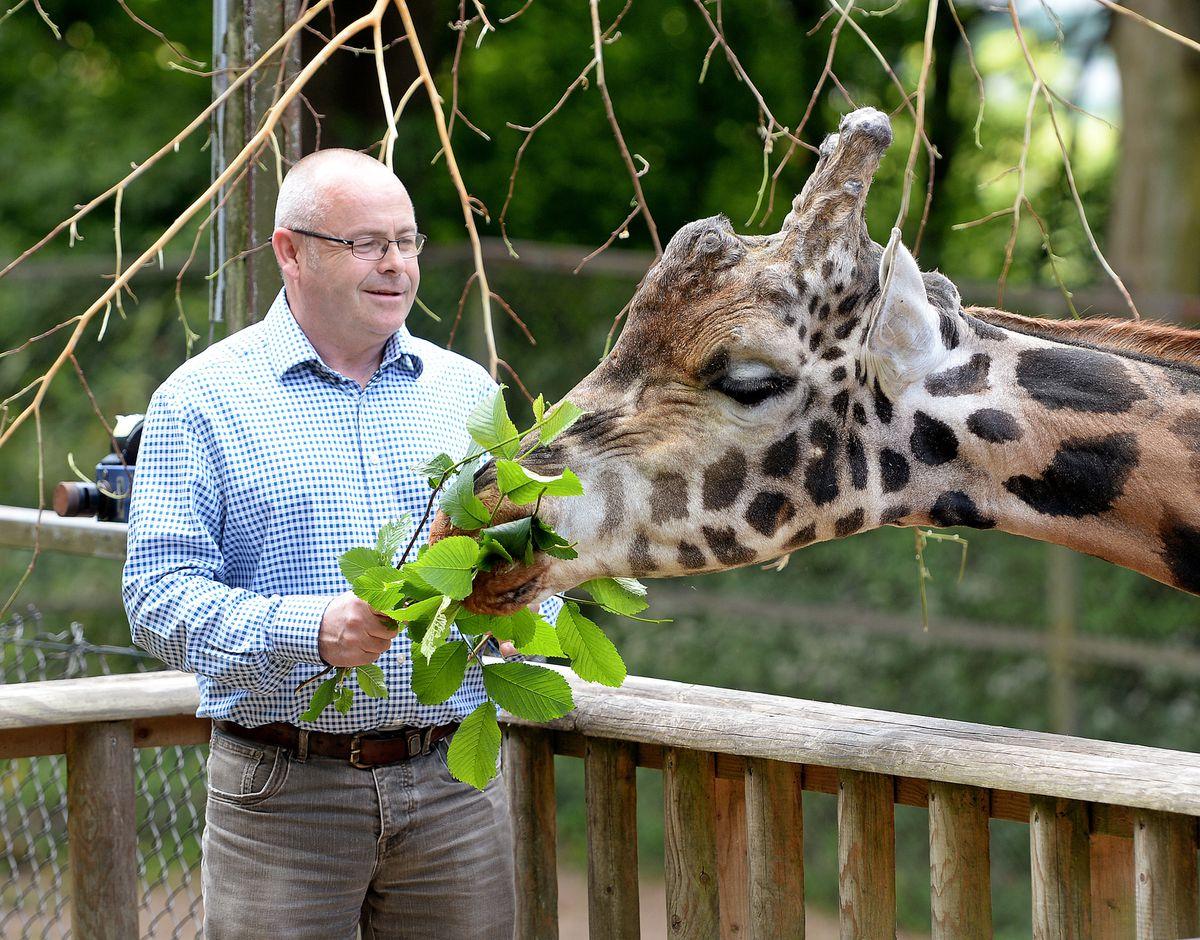 Dudley Zoo director Derek Groves feeds a giraffe