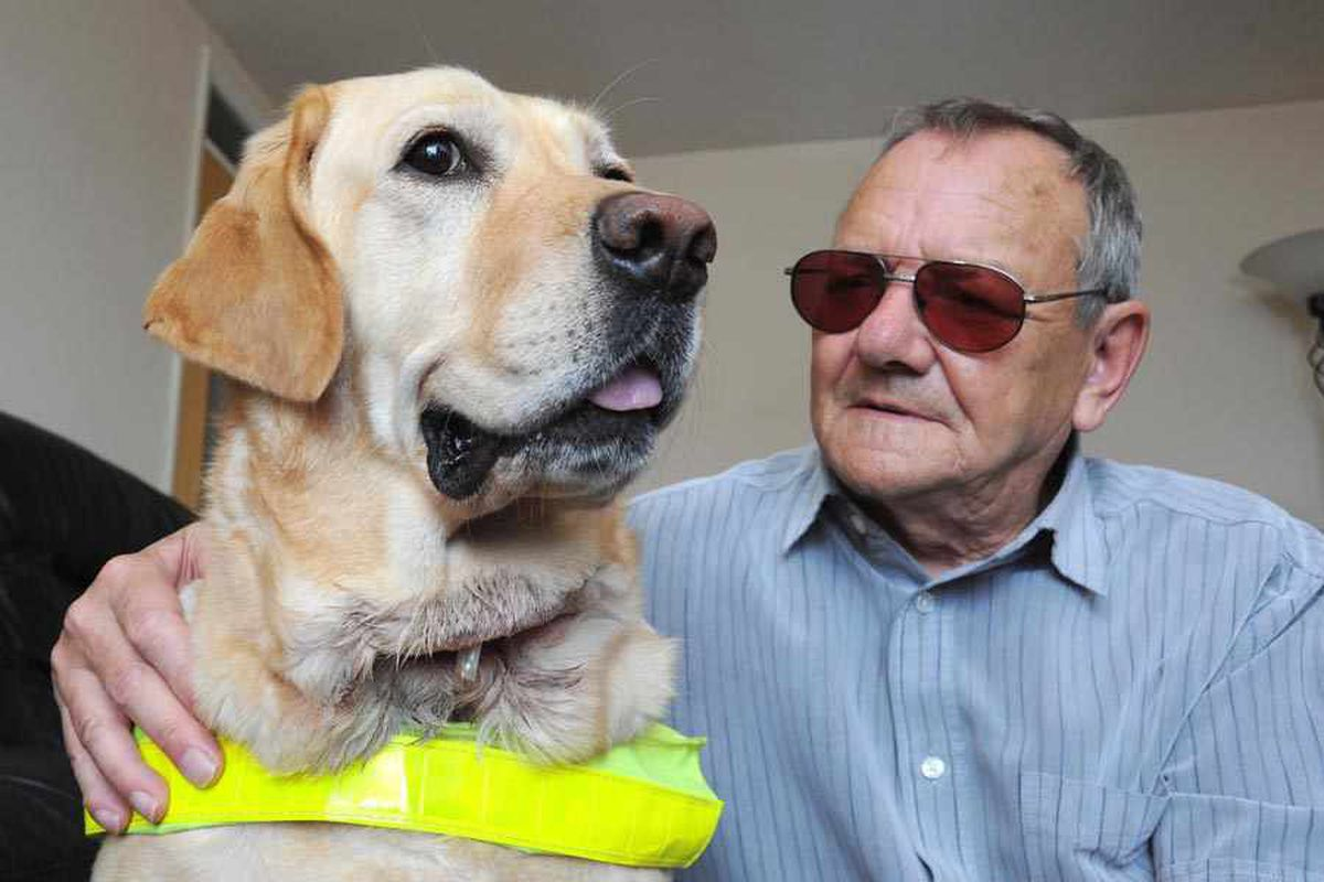 Terrier in Wolverhampton city centre guide dog attack allowed to live