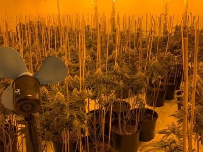Cannabis farm found in Kidderminster