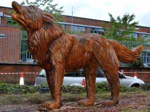 One of the new wolf sculptures on the A449 in Wolverhampton