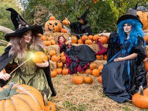 Halloween at West Midland Safari Park