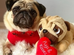Get your paws on pups this Valentine's Day at Birmingham Bullring and Grand Central