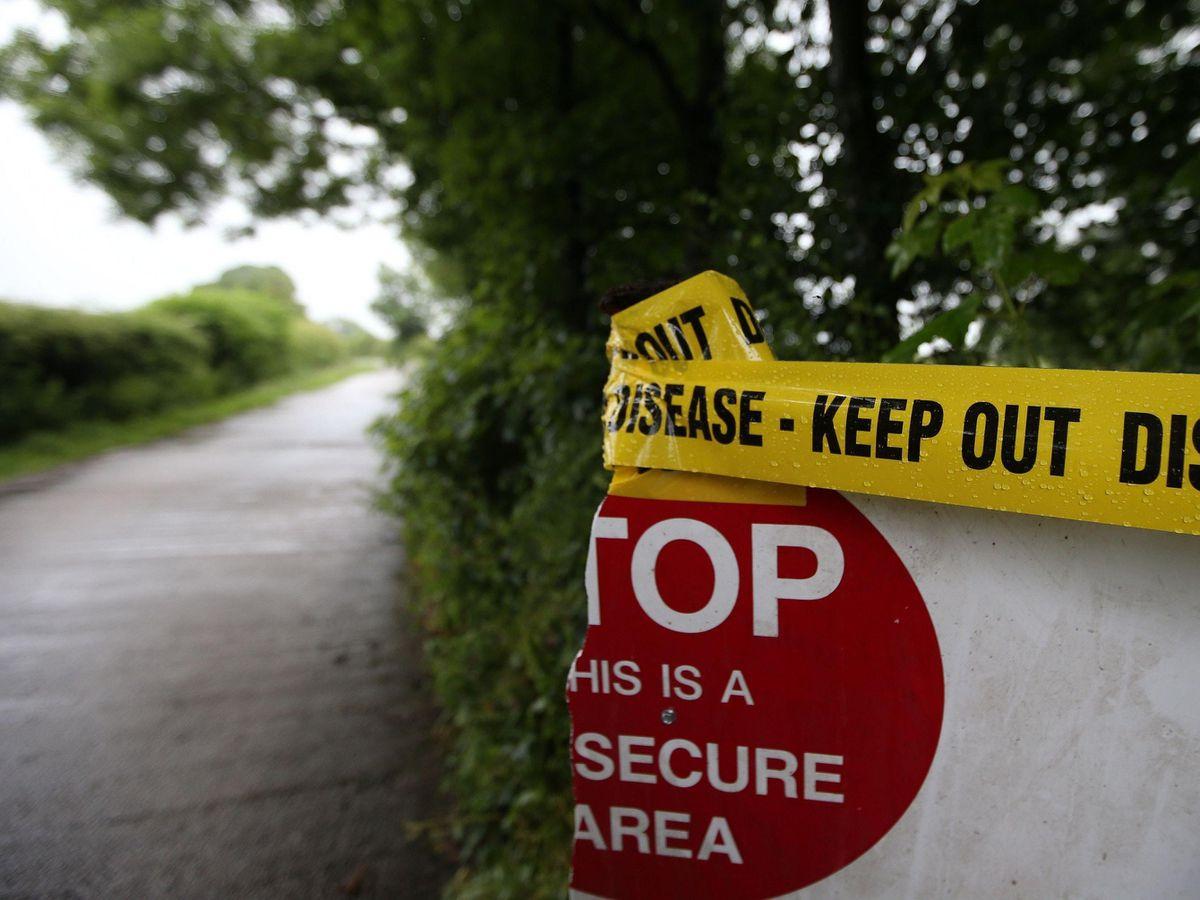 Kent farm slaughters flock after suspected bird flu case