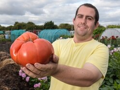 Talking to them is the trick: Wednesbury gardener Chris is a monster veg expert