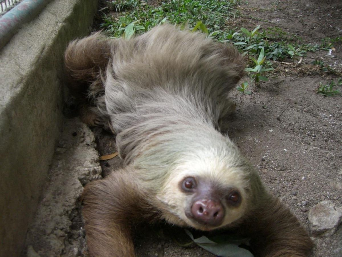 Geoff has enjoyed seeing an abundance of wildlife on his travels including this sloth