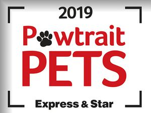 We want to see your Pet Pawtraits!