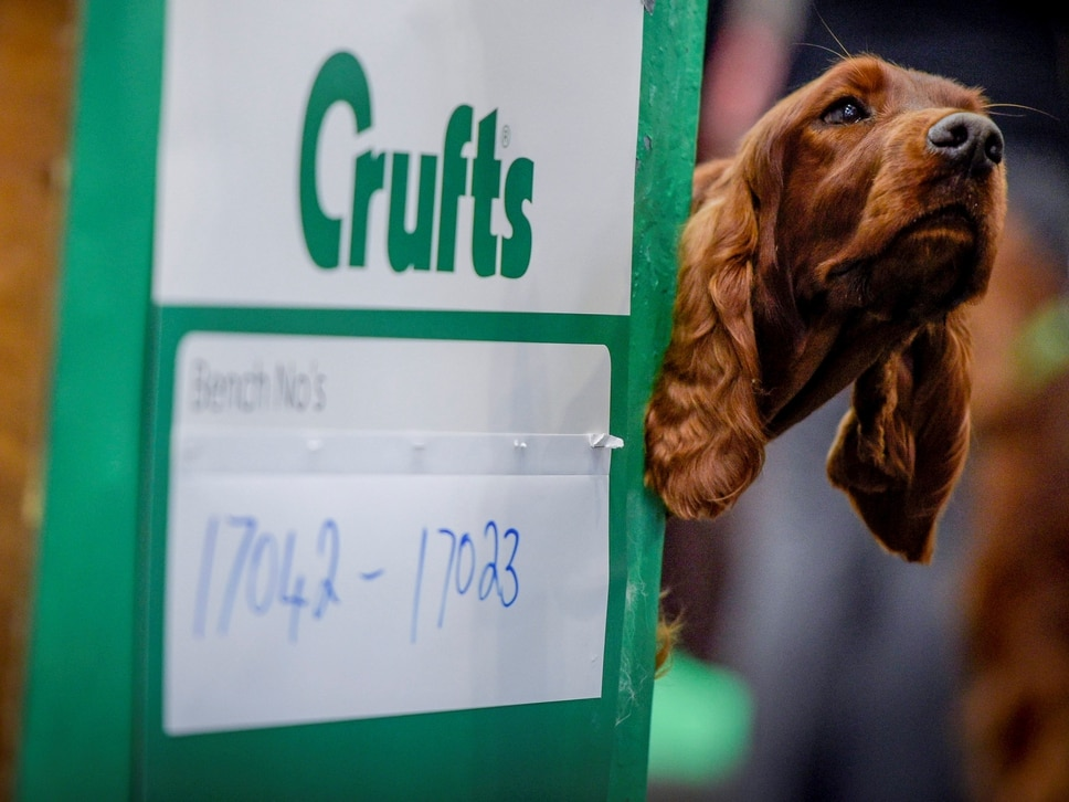 WIN: Tickets to Crufts at Birmingham NEC