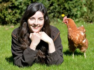 Kelly Burgess matches up hens whose egg-laying work is up with new homes in the West Midlands and Staffordshire