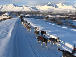 Dog sled squad that went viral whittled down to final 14 for endurance race