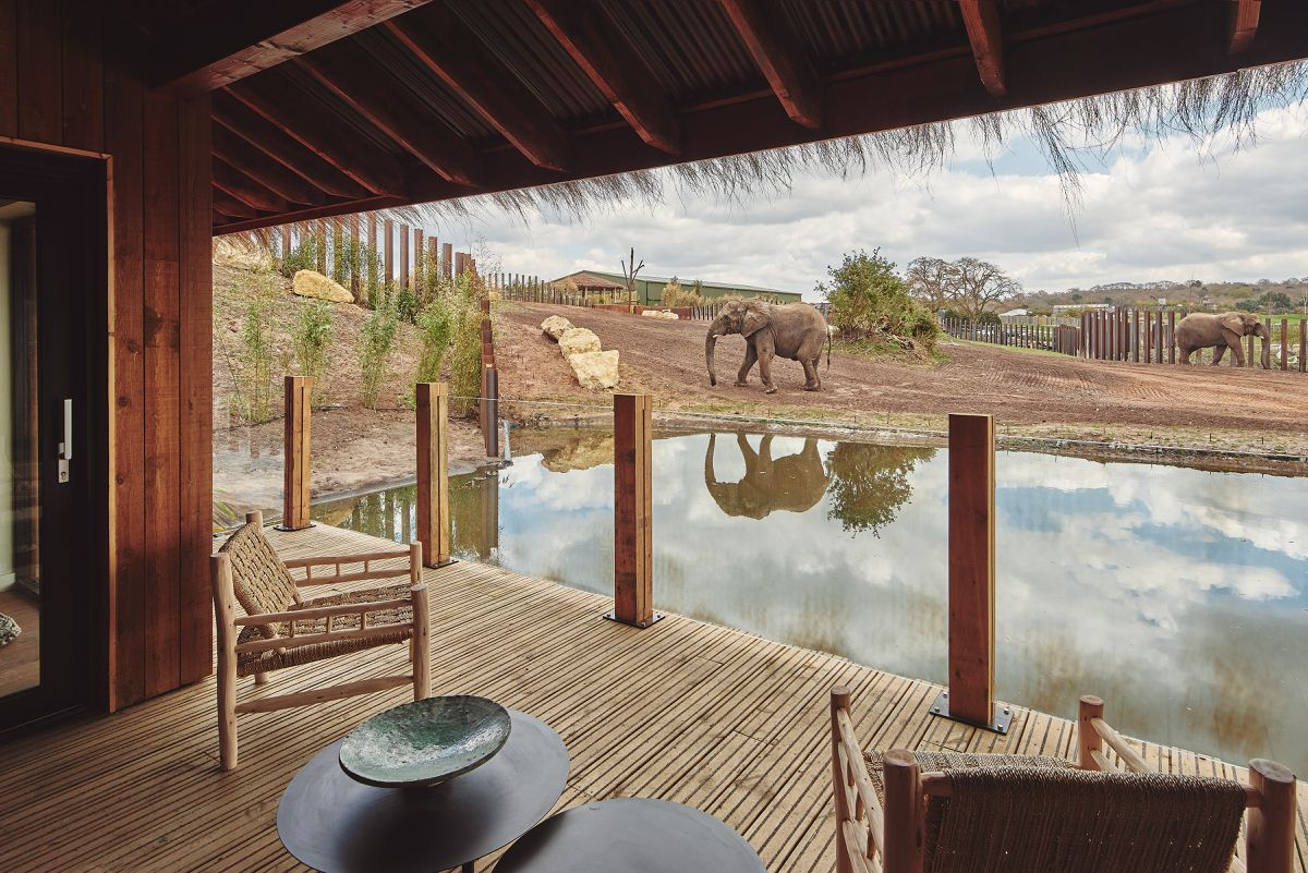 The new elephant lodges offer views of the Bewdley attraction's three resident elephants – Latabe, Five and Sutton