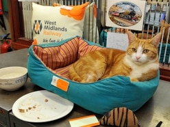 It's a cat's life for station pet George