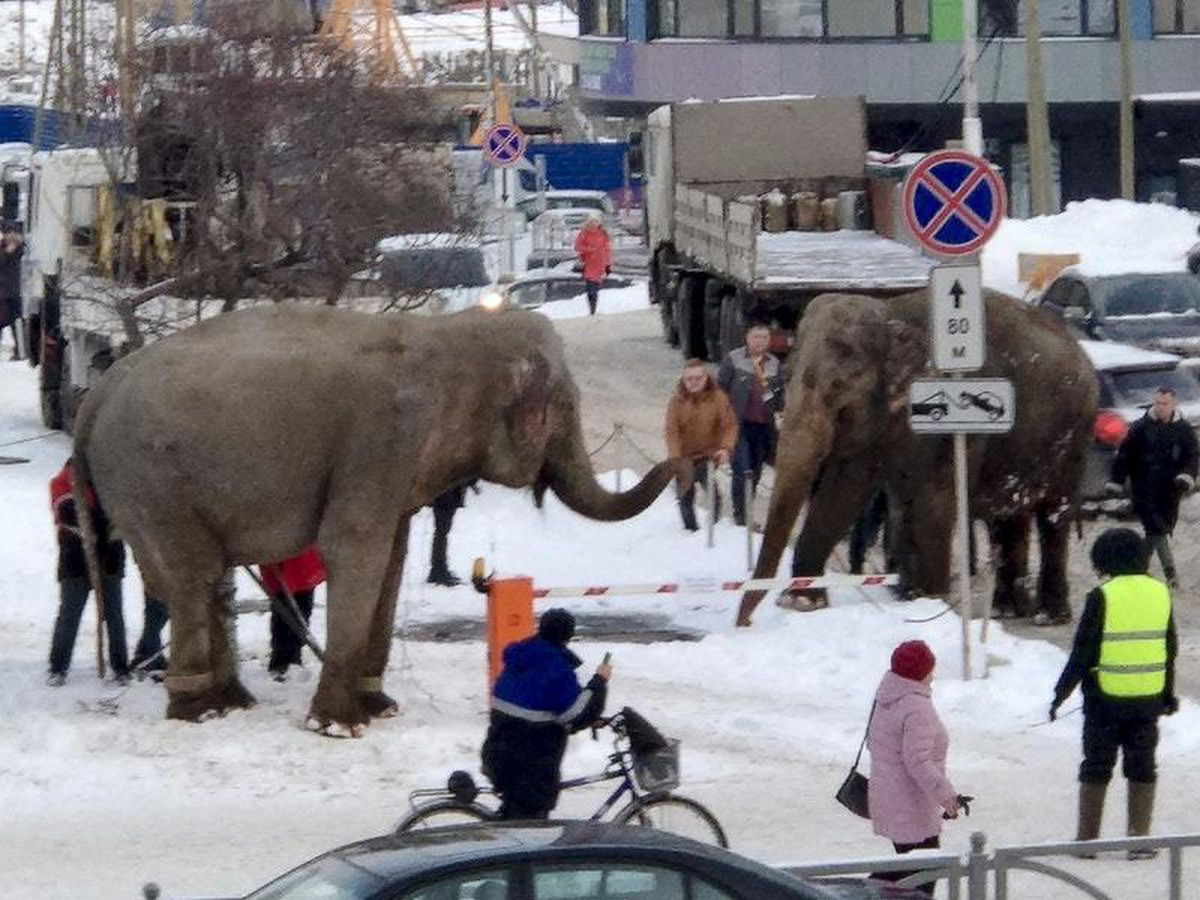 Elephants in the streets of Yekaterinburg