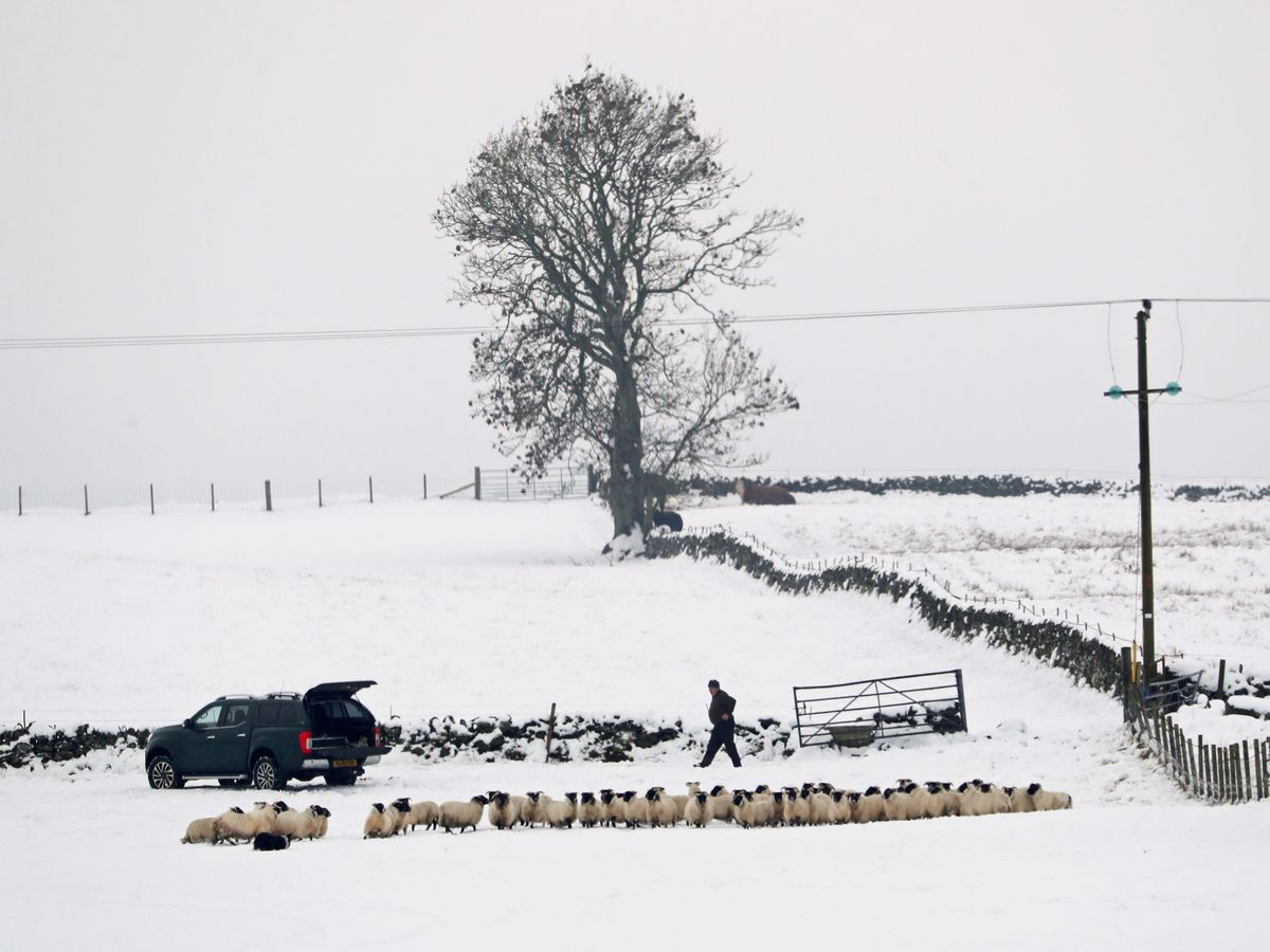 A farmer tends to sheep in a snow-covered field near Auchterarder, Perthshire