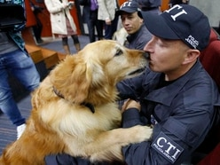Sniffer dogs given medals during retirement ceremony in Colombia