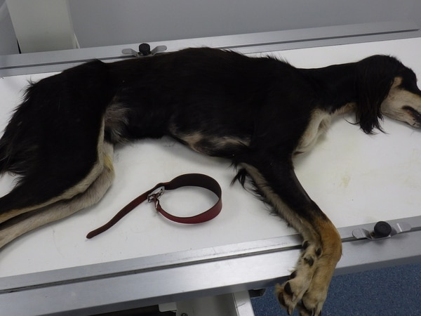 Dog dumped in 'absolute agony' with fractured skull and broken back
