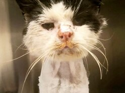 Heartbreak as sick stray cat Maximus dies despite generous donations