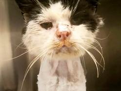 Heartbreak as sick stray cat Maximus dies despite generous donations