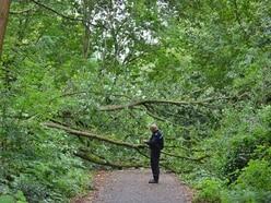 Man struck by tree near Stafford cemetery dies