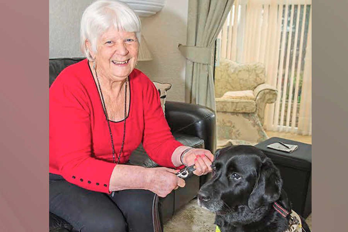 Taxi driver left blind woman stranded - after claiming her guide dog would urinate and leave hairs in his car