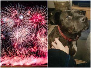 For pets' sake, we must limit fireworks