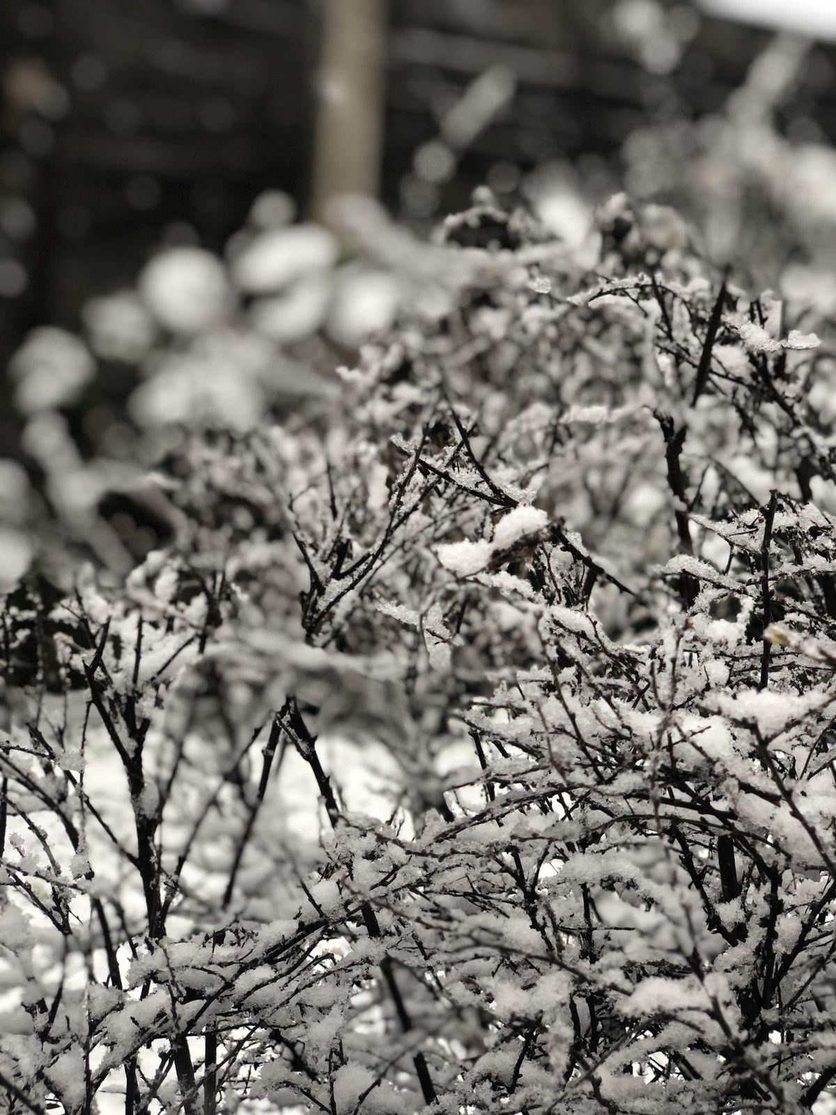 Snow in Pelsall, Walsall, by Jade Patten