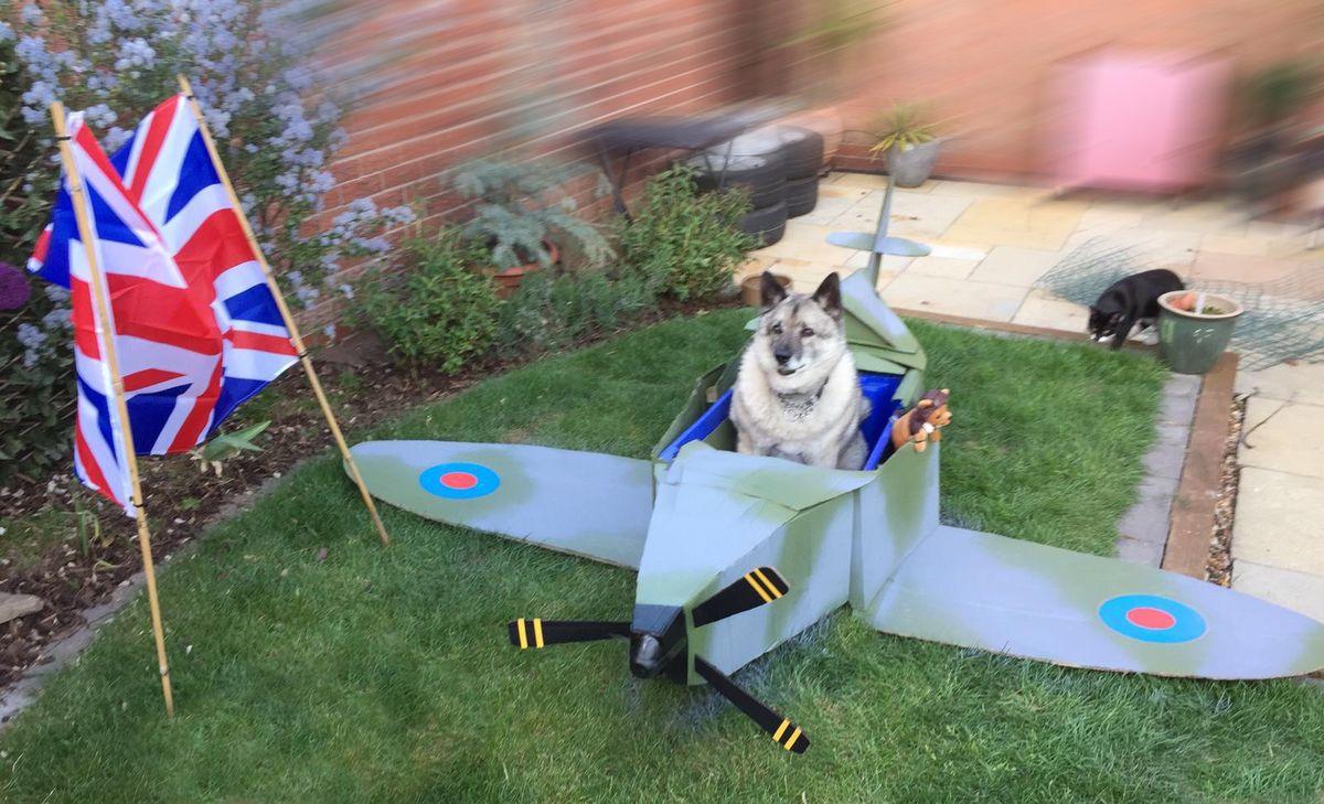 Captain Ozzy in his cardboard Spitfire in Boley Park, Lichfield