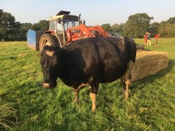 Fire crews work to save cow in river