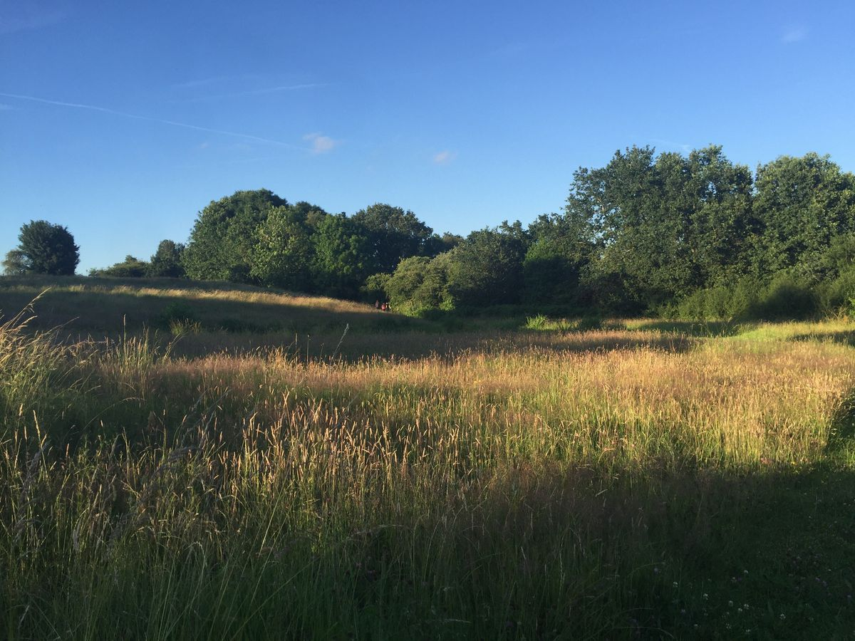 The meadow At Muldoon Close, Chadsmoor, Cannock