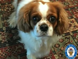 Penny was stolen on December 23 and West Midlands Police have renewed the appeal to find her (Image by West Midlands Police)