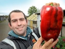 Wednesbury man hoping to break world record with veg