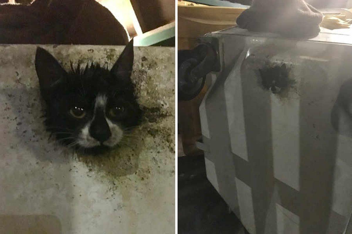 Wheelie lucky kitten rescued from bin after getting head stuck through hole