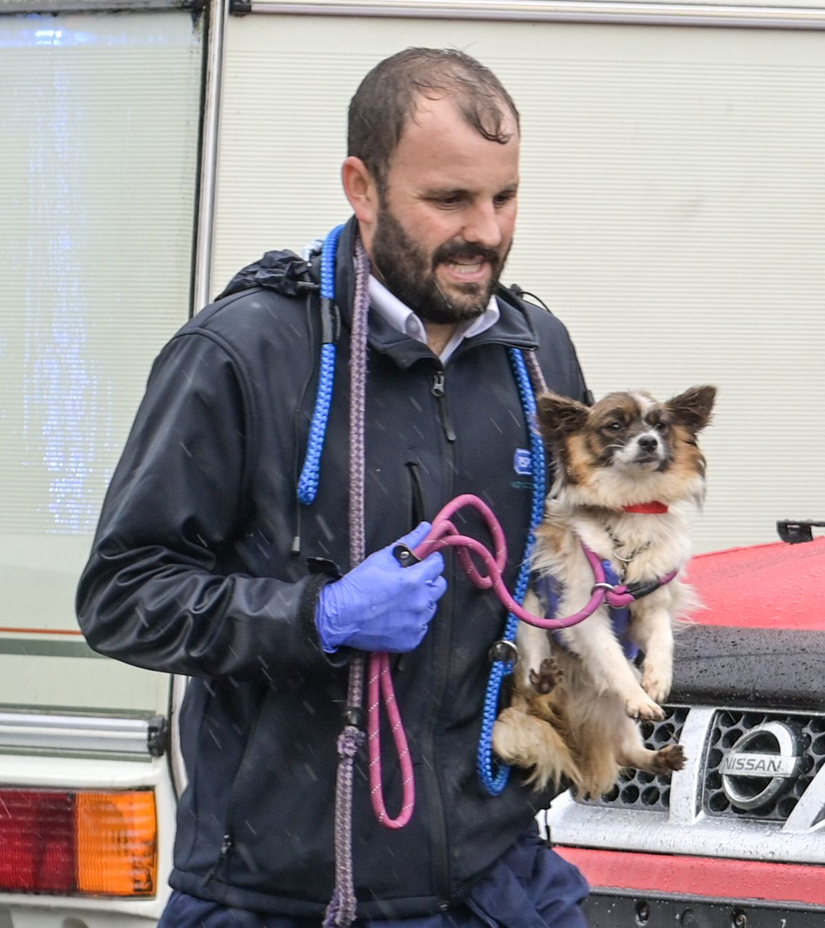 One of the dogs taken from the house. Photo: SnapperSK