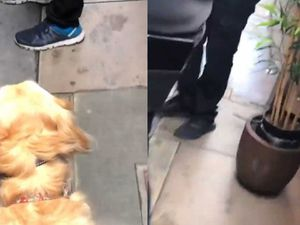 Ava the guide dog meets a number of obstacles while walking with Amy in Soho