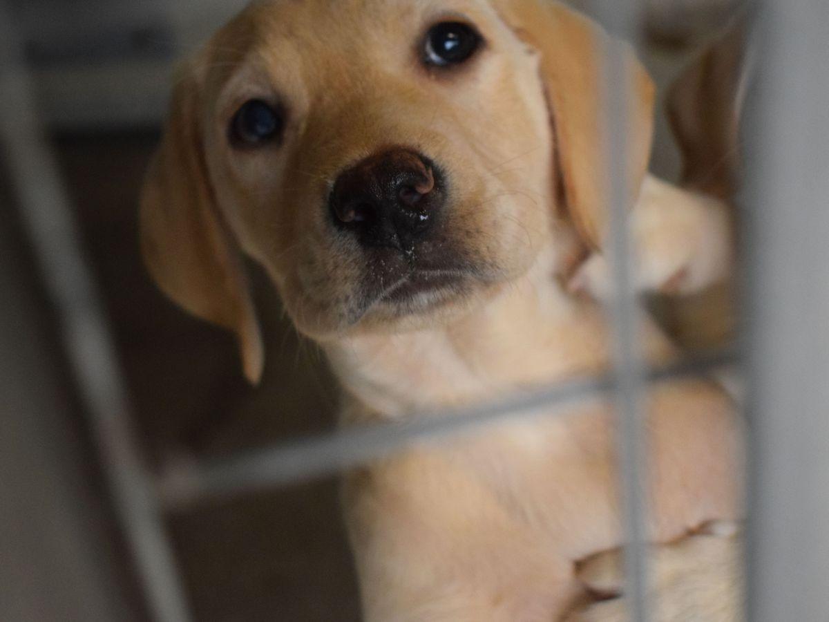 Puppy caged