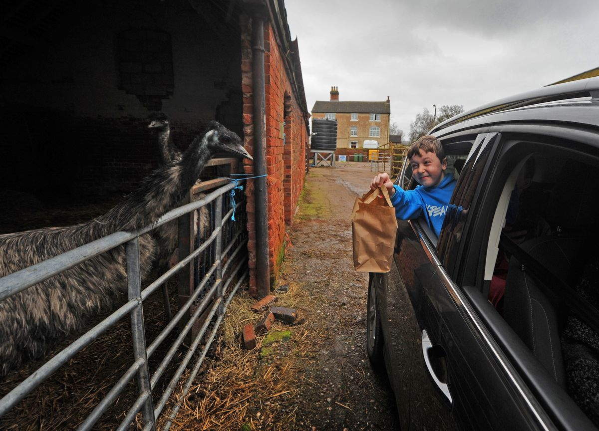 With his food, looking at the farm emus is Ethan Auger, aged 10, of Cannock