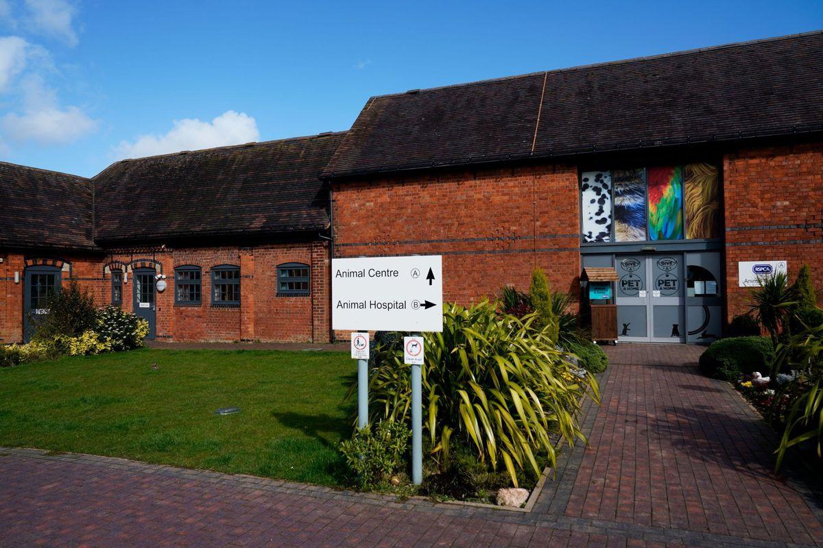 Birmingham Animal Hospital and Centre. Photo: RSPCA