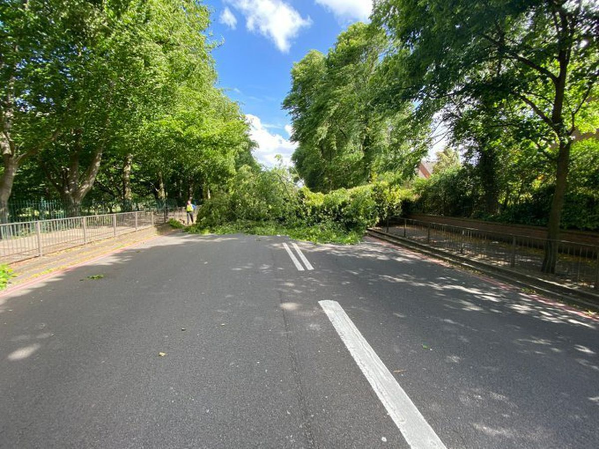 A tree was blown down outside Walsall Arboretum. Photo: @stmatthewswmp